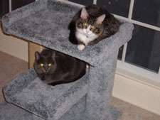 These two cuties are more than happy to share their cat perch. There's even enough room for one more!
