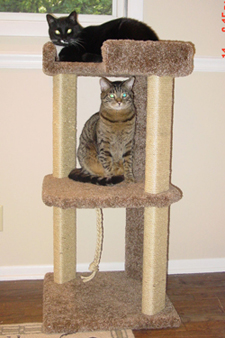Here are a couple of pictures of the new tower with Jinx & Bandit! - Darcy