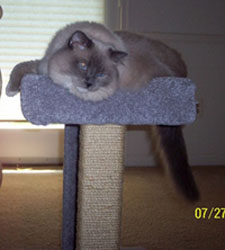 Is that a look of content or what? Harley is loving her cat perch!