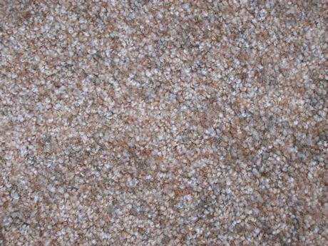 Cat furniture carpet choices carpet colors carpet variety - Carpet colors for white walls ...